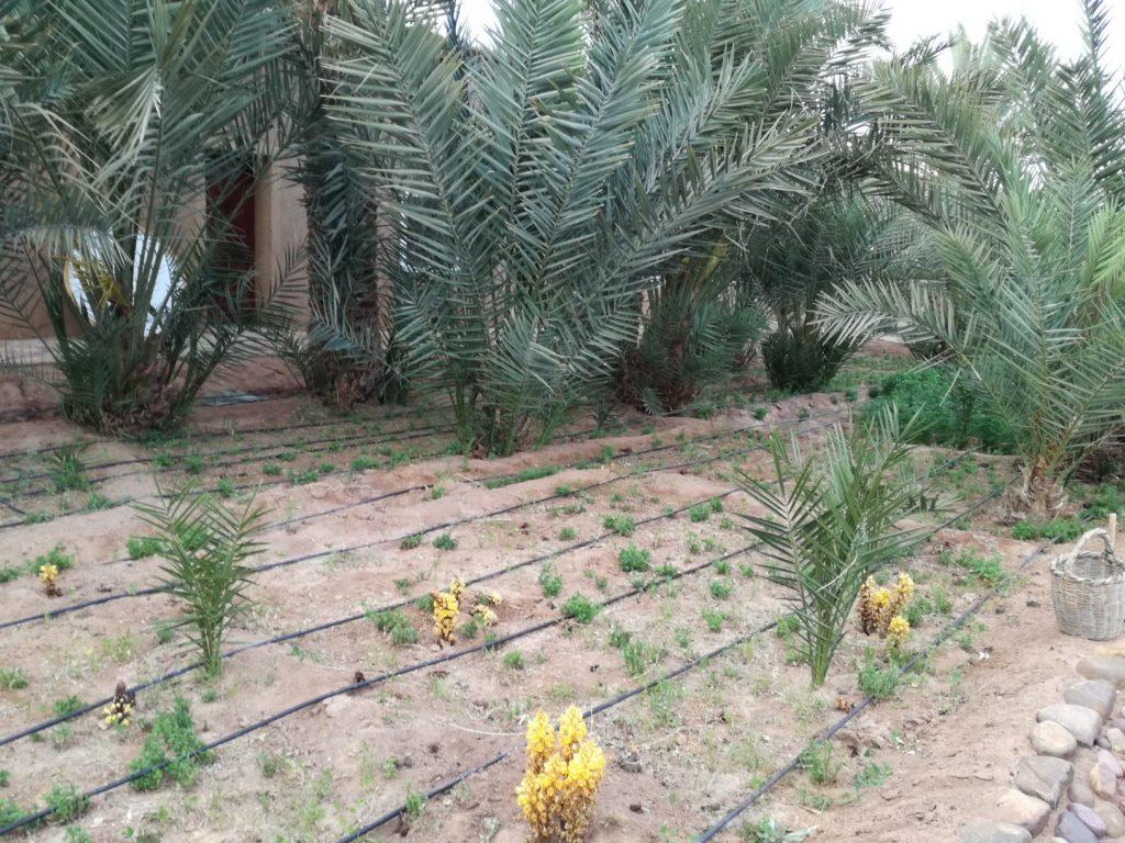 plantation a La ferme Serdrar